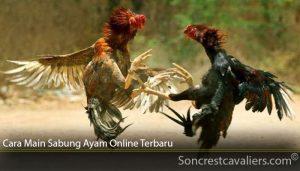 Cara Main Sabung Ayam Online Terbaru
