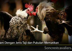 Ciri Ayam Dengan Jenis Taji dan Pukulan Mematikan