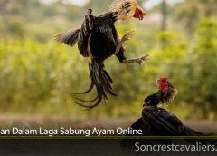 Tahapan Dalam Laga Sabung Ayam Online